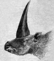 blog unicorn